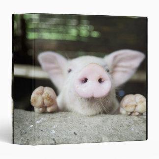 Cerdo del bebé en la pluma, cochinillo