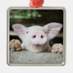 Cerdo del bebé en la pluma, cochinillo adorno cuadrado plateado