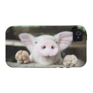 Cerdo del bebé en la pluma cochinillo iPhone 4/4S carcasas