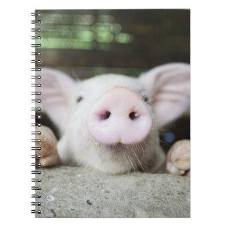 Cerdo del bebé en la pluma, cochinillo libros de apuntes con espiral