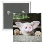 Cerdo del bebé en la pluma, cochinillo pin cuadrada 5 cm