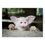 Cerdo del bebé en la pluma, cochinillo tarjeta de felicitación