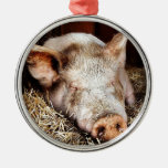 Cerdo del ocio adorno de navidad
