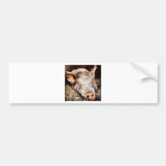 Cerdo del ocio pegatina para auto