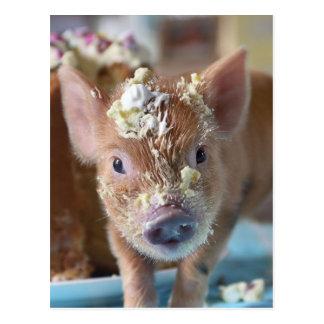 Cerdo divertido y la torta postales