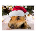 Cerdo dulce en árbol de navidad del gorra de Santa Postales