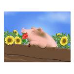 Cerdo en cacerola tarjetas postales