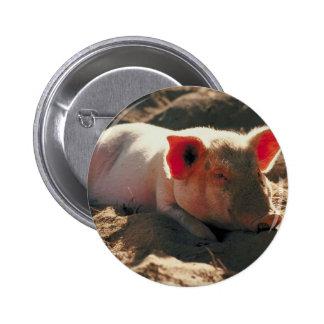 Cerdo en el Sun Pins