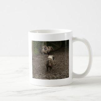 Cerdo en fango tazas de café