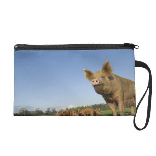 Cerdo en un campo