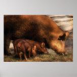 Cerdo - enlaces de familia poster