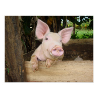 Cerdo feliz poster