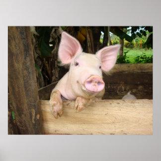 Cerdo feliz póster