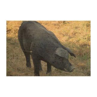 Cerdo Gascon Impresión En Corcho