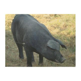Cerdo Gascon Impresiones En Madera
