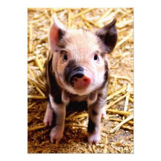 Cerdo lindo del bebé cojinete
