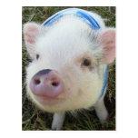 Cerdo lindo del Belly de pote Tarjetas Postales