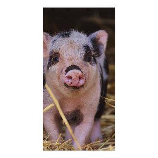 Cerdo lindo dulce tarjeta personal con foto