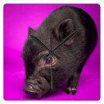 Cerdo negro del bebé reloj cuadrado