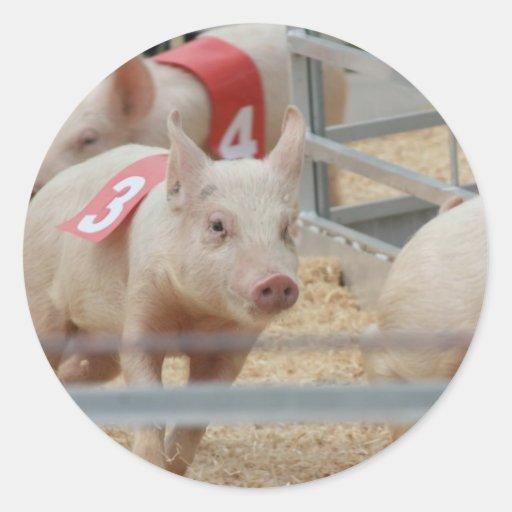 Cerdo que compite con el cochinillo rosado número  pegatina