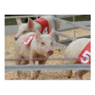 Cerdo que compite con el cochinillo rosado número postal