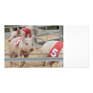 Cerdo que compite con el cochinillo rosado número  tarjetas fotográficas
