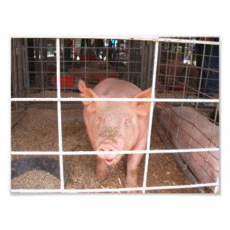 Cerdo que habla en una pluma de cerdo fotografia