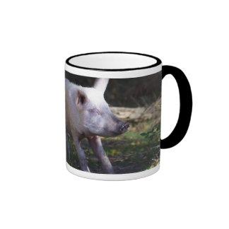 Cerdo que rasguña la taza