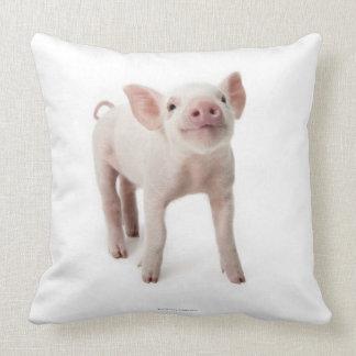 Cerdo que se coloca de mirada para arriba almohadas