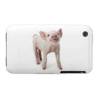 Cerdo que se coloca de mirada para arriba iPhone 3 protectores