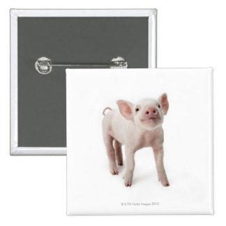 Cerdo que se coloca de mirada para arriba pins