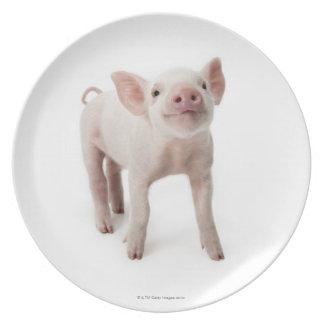 Cerdo que se coloca de mirada para arriba platos