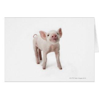 Cerdo que se coloca de mirada para arriba tarjeta