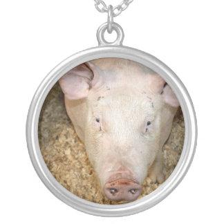Cerdo rosado con la imagen linda del piggie de la