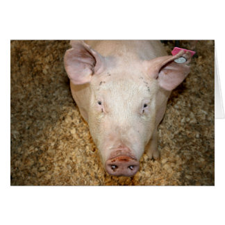 Cerdo rosado con la imagen linda del piggie de la  tarjetón