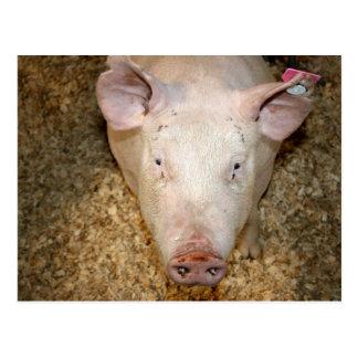 Cerdo rosado con la imagen linda del piggie de la  tarjeta postal