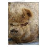 cerdo tarjetas