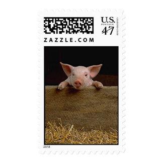 Cerdo Timbres Postales
