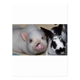 Cerdo y amigo de la barriga postales