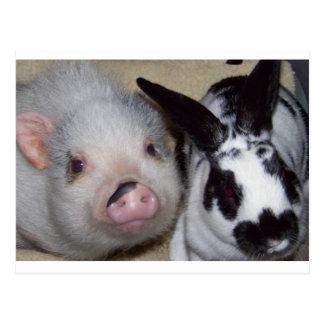 Cerdo y amigo de la barriga tarjeta postal