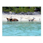Cerdos de la natación en postal de la playa