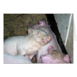 Cerdos del bebé tarjetas