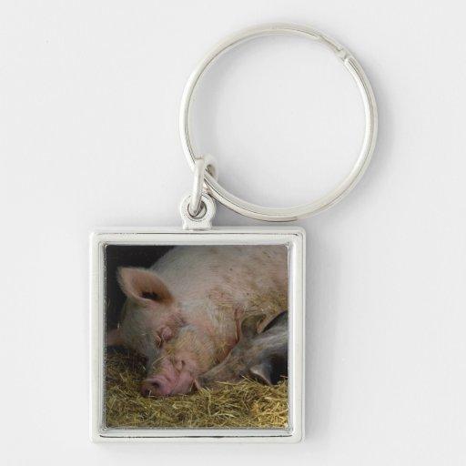 Cerdos el dormir llaveros
