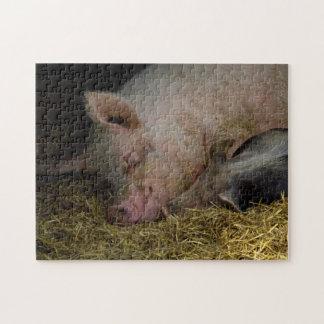 Cerdos el dormir rompecabezas