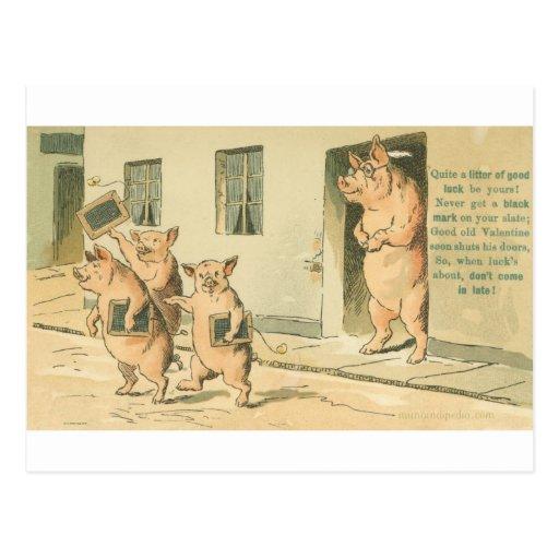 cerdos en la escuela tarjetas postales