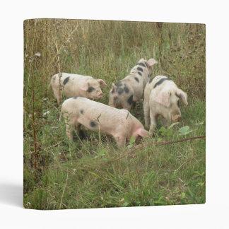 Cerdos en un álbum de fotografía del campo