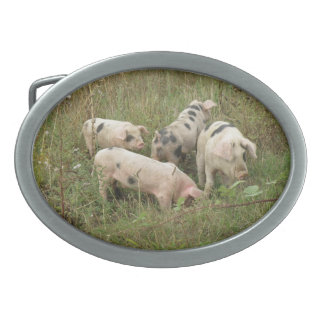 Cerdos en una hebilla del cinturón del campo hebillas de cinturon ovales