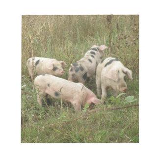 Cerdos en una libreta del campo blocs