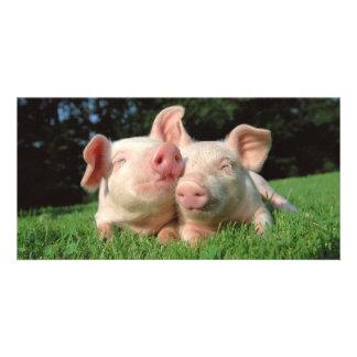 Cerdos junto plantilla para tarjeta de foto