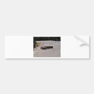 Cerdos negros salvajes pegatina de parachoque
